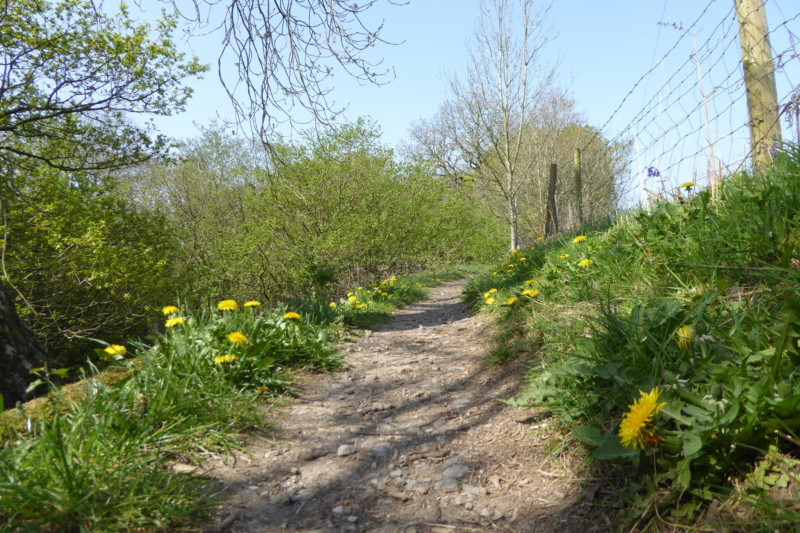 Flowers lining the path out of Etherow Country Park