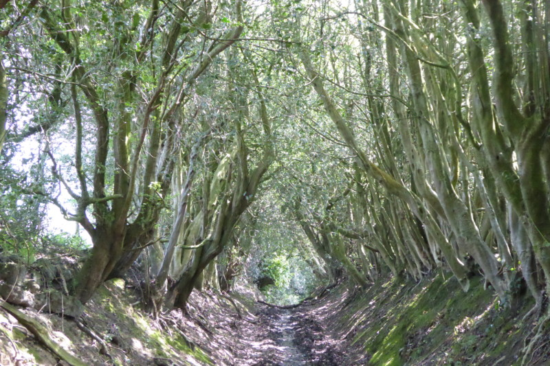 Walking in the woods on the east side of Werneth Low