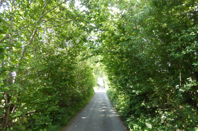 The Wanla Scar Road, full of trees